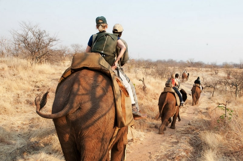 Livingstone Elephant Rides